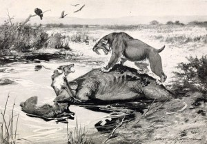 A sabre tooth cat and a dire wolf fight it out over a mammoth carcass that has become trapped in the tar pits in this illustration of what may have been a common scene 20,000 years ago in the Los Angeles basin. Public domain image from Wikimedia commons. https://commons.wikimedia.org/wiki/File:Smilodon_and_Canis_dirus.jpg