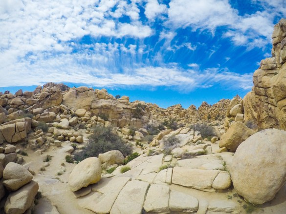 Entry to the 2016 DTP California Fieldtrip Photo Competition. Plutonic intrusions of monzogranite rocks shaping the geological landscape of Joshua Tree National Park. Image by Waheed Arshad.