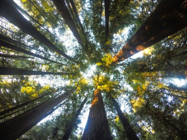 Runner-up 2016 DTP California Fieldtrip Photo Competition - Redwood Cathedral. Image by Waheed Arshad.