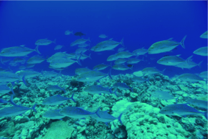 Many marine organisms find a home in coral reefs.