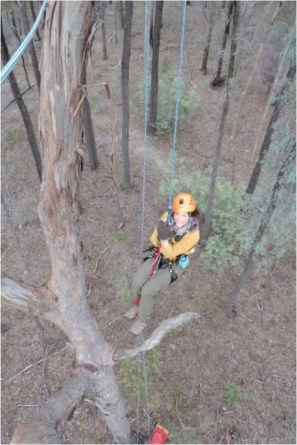Tree climbing training in Australia. Image copyright Gemma Taylor.