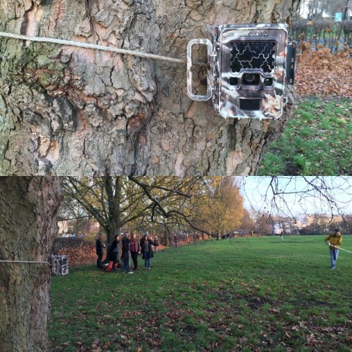 Camera trapping in Regent's park. Image by Dave Arnold.