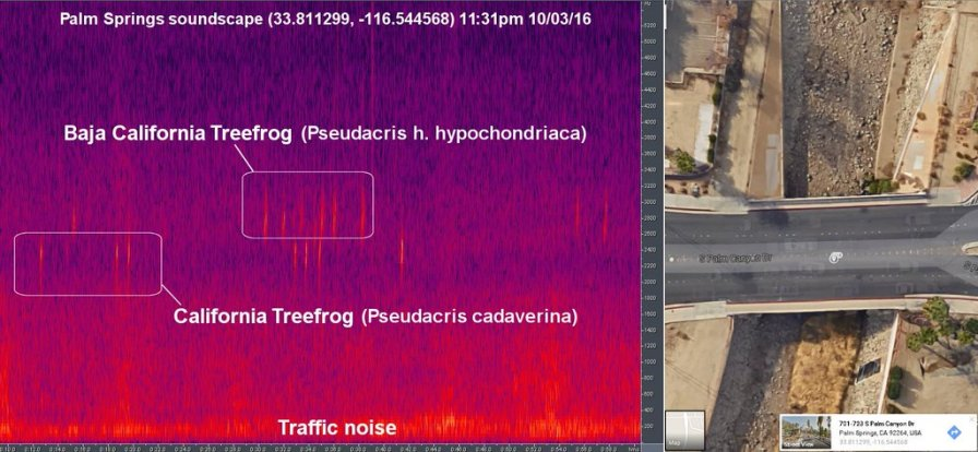 A visualisation of a soundscape recorded on the 2016 California fieldcourse, in Palm Springs. By Richard Beason.