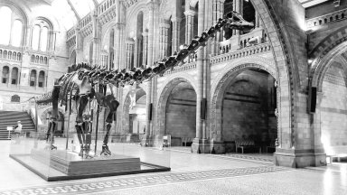 The Natural History Museum. Image by Adrienne Kerley.