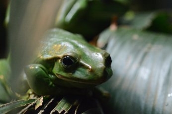 Herpetology at the Reptile House in London Zoo. Image by Joe Williamson.