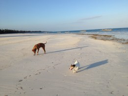Pluto and Scooby on our Beach Walks