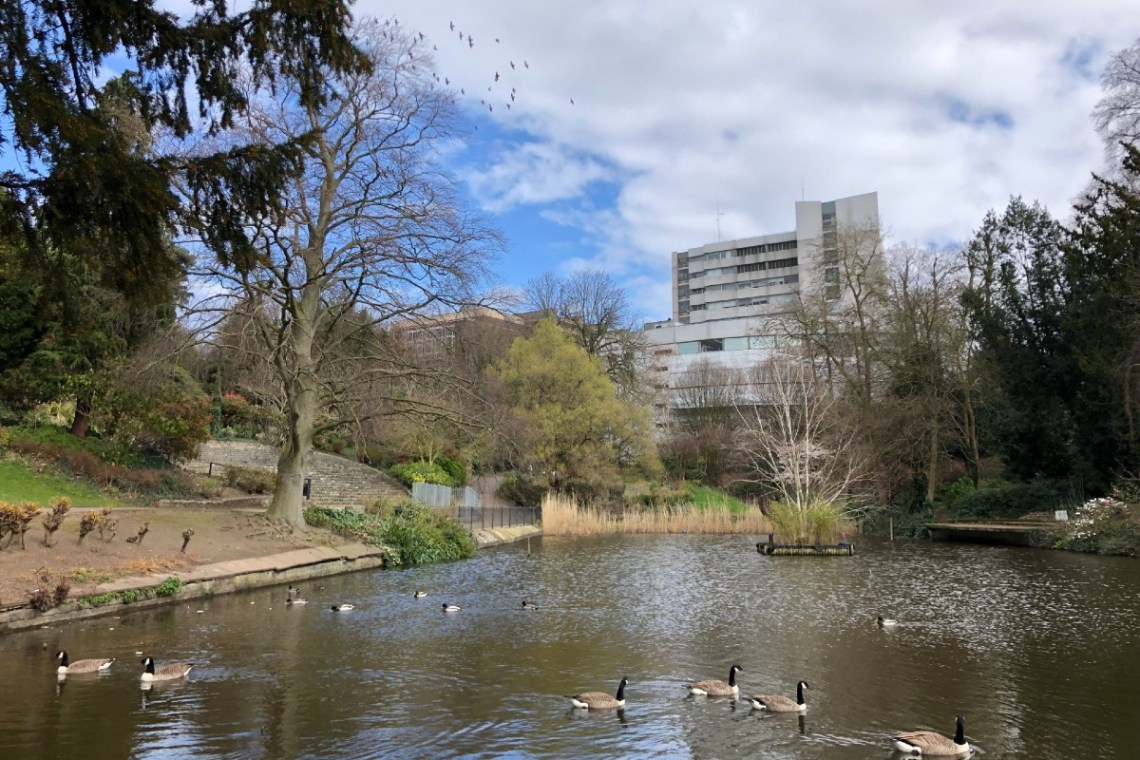 A river filled with geese next to a park