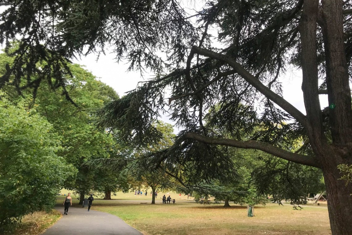 A large tree in a park with people walking along the path, sitting on benches and playing in the field