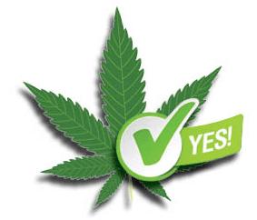 Vote Weed