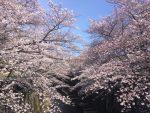 桜と再会と幸せと