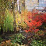 六本木、週末散策のおすすめー安藤忠雄展と紅葉の織り成す芸術