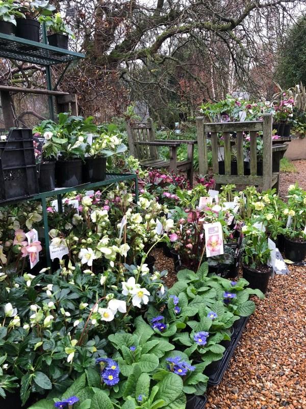 Chelsea physic garden Six on Saturday