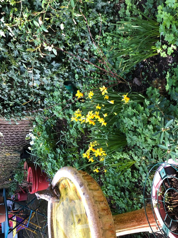 colour in a cottage garden