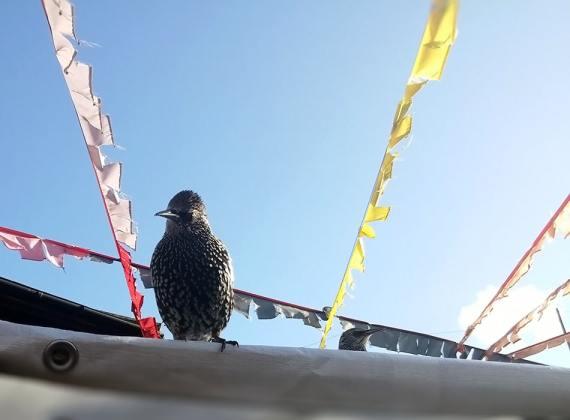 Camden Market birds