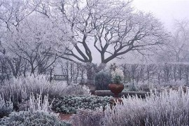 How to Maintain an Attractive Garden in Winter