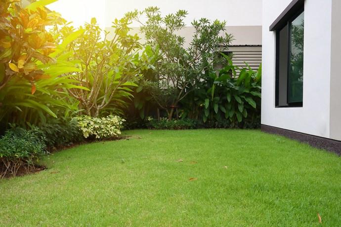 Green healthy garden