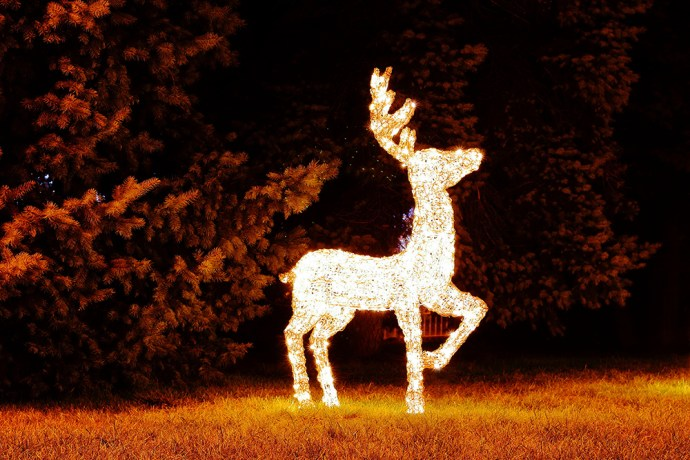 Christmas reindeer (deer with lights) in the garden at night. Christmas decorations. Illuminated reindeer.