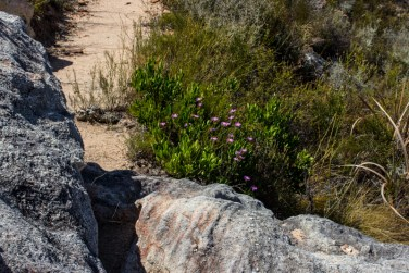 The trail at La Motte