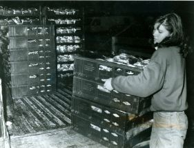 Jane Roy, assistant director of the London and Area Food Bank, unloads a supply of bread on Friday, the bread is donated weekly by Dempster's. (November 23, 1990)