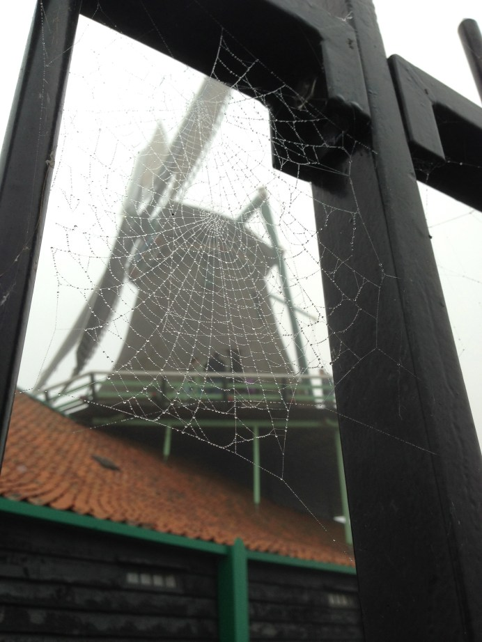 Tamiko gets artsy with her web and mill.