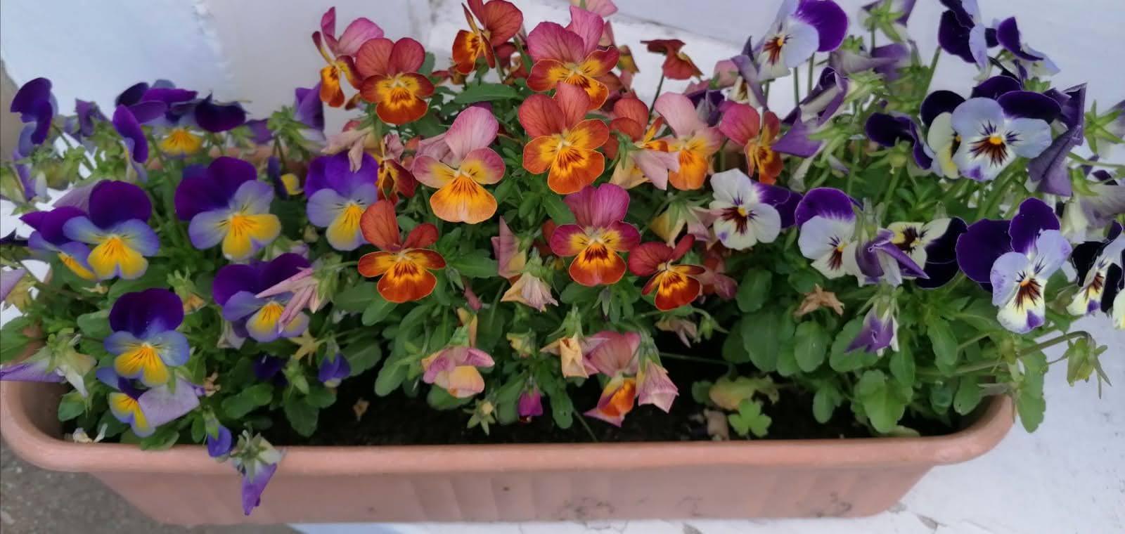 Best Pot Plant: Memory, Seeds Project