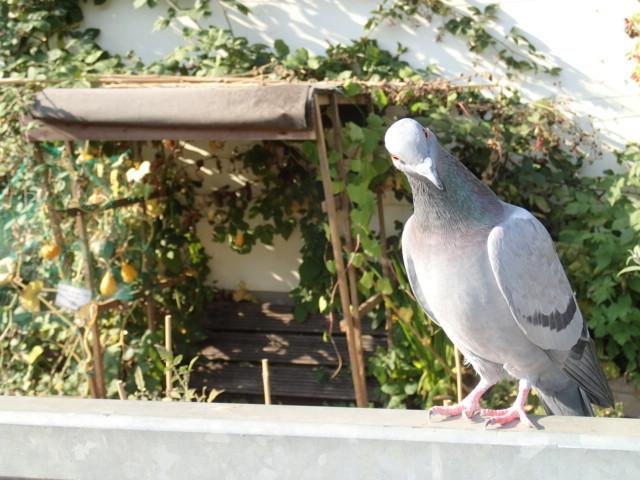 Best Animal Portrait: Hampstead Heath Energy Garden