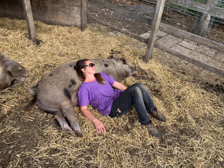 Pleasantest Pig winner - Kentish Town City Farm