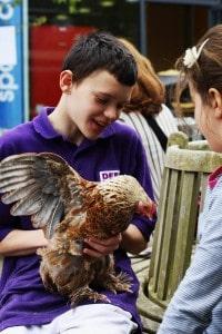 boy in purple shirt holds a chicken