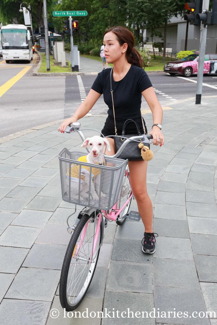 People of Singapore - dog transport