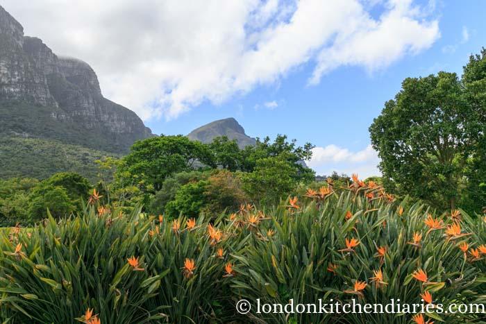 Botanical Gardens Kirstenbosch Cape Town