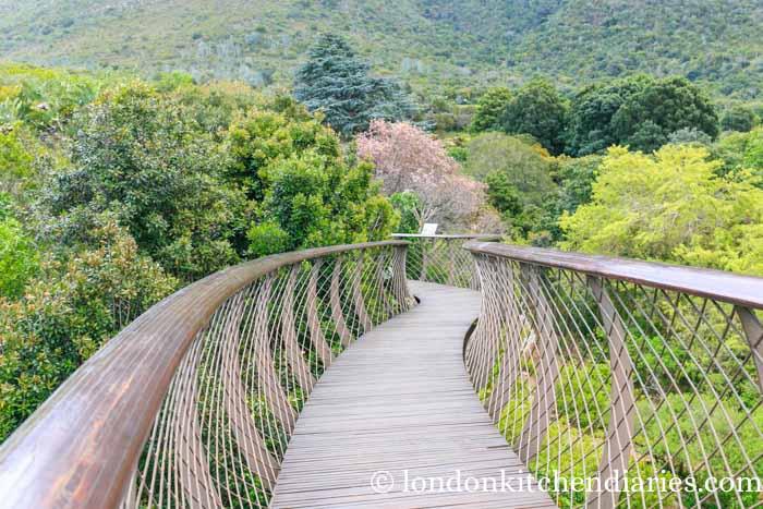 Treetop Canopy Walkway at the Botanical Gardens Kirstenbosch