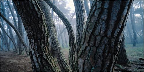 Bae Bien-u: From Pine Tree