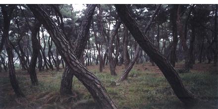 Bae Bien-u: Sacred Wood