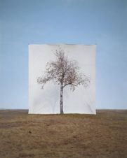 Lee Myoungho: Tree #1, 2006
