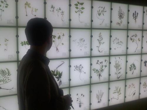 Inside the herbal medicine museum in Sancheong-gun