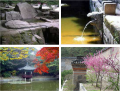 Thumbnail for post: The Changdeokgung's Secret Garden – A Part of Nature