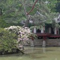 Thumbnail for post: 2011 Travel Diary day 2: the Changdeokgung and Biwon