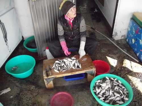 Preparing what I was told were small blowfish, in Seoho-dong market