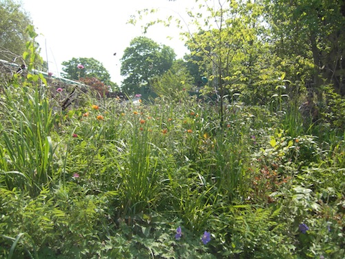 Some of the wild, unstructured planting in the DMZ garden