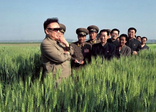 Kim Jong-il looks at a field of wheat