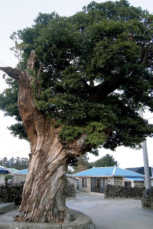The April 3 Massacre Tree