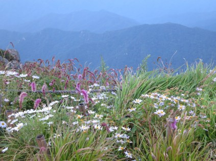 Wild flowers on Cheonwangbong