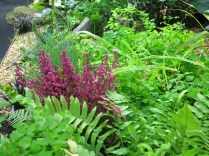 Dark pinks among the bright green ferns