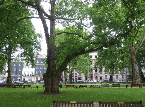 A tree in Berkeley Square