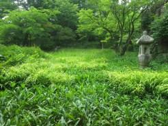 Wooded area near the tea shop