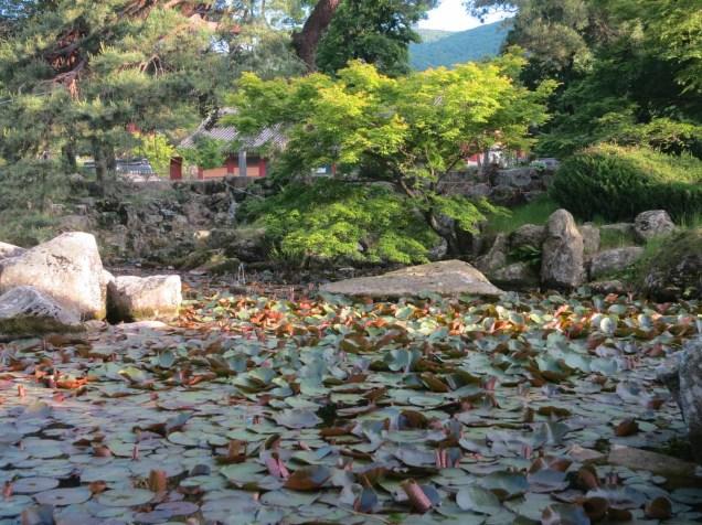 Daeheungsa's lily pond
