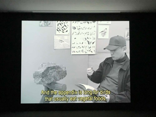 Kim Beom: A Rock That Was Taught It Was a Bird (2010)