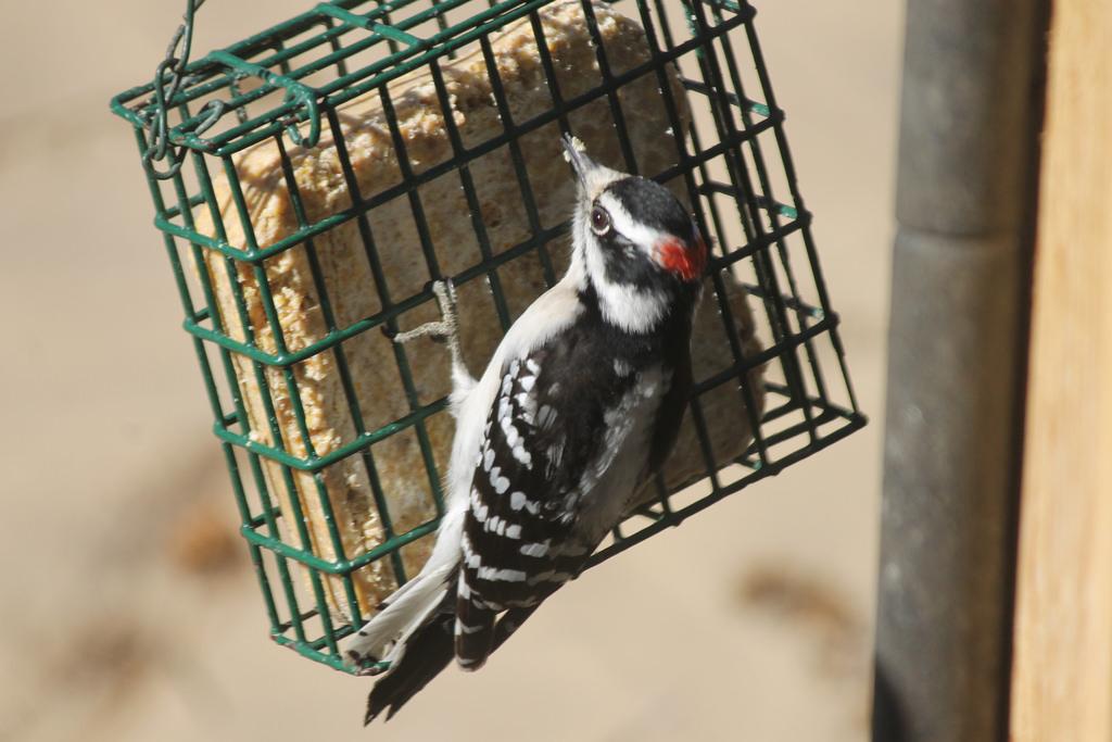 Bird Suet Recipe