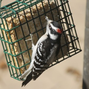 Bird Suet Recipe