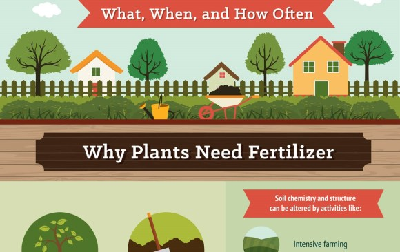 Fertilizer Facts – What, When and How Often